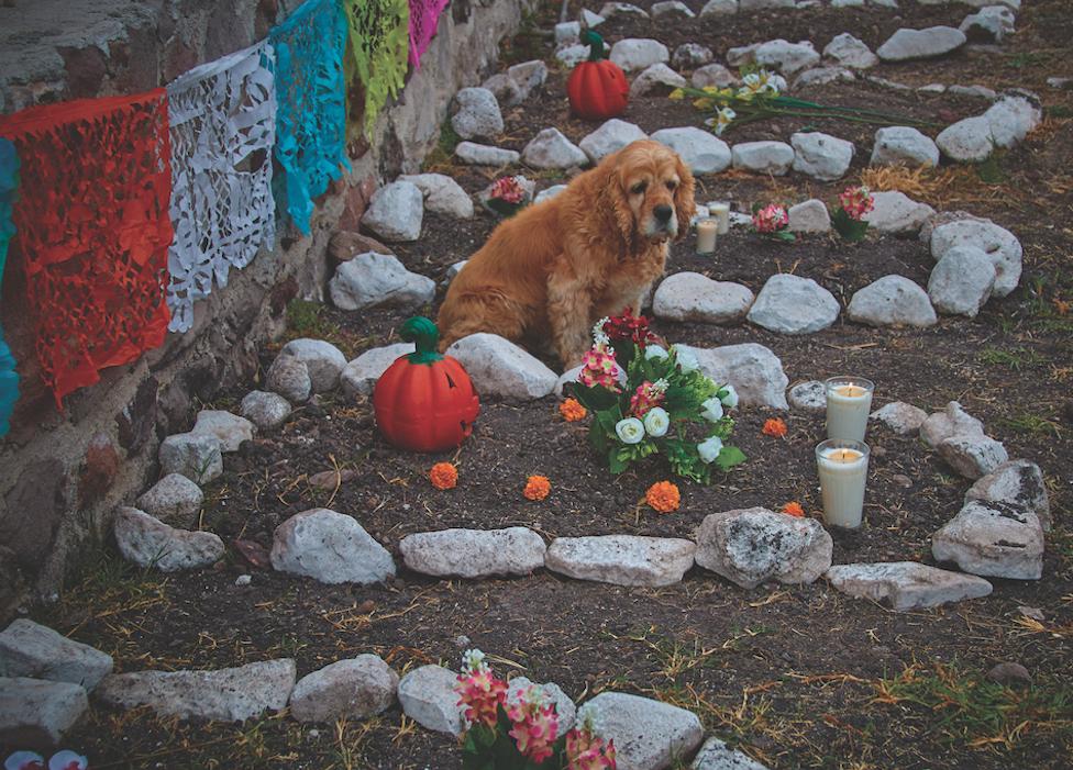 cementerio para perros